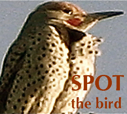 spotthebirdlogocopy