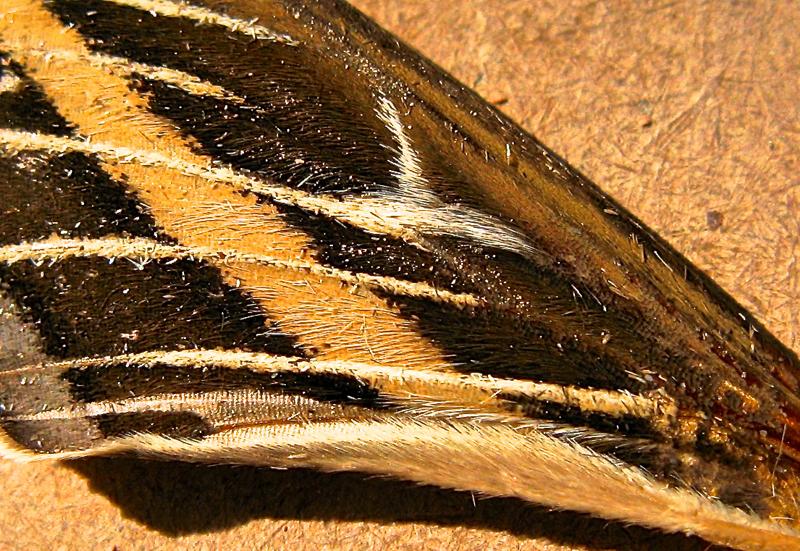 dragonwingrug